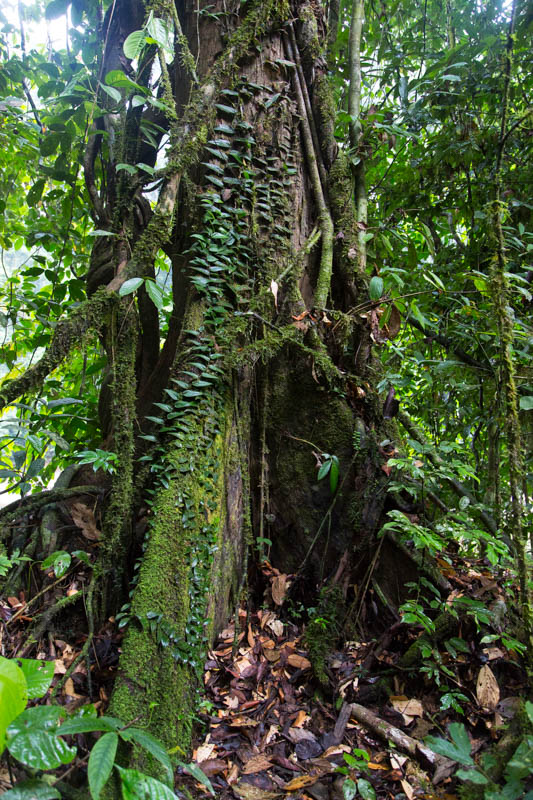 Epiphytes On Tree Trunk
