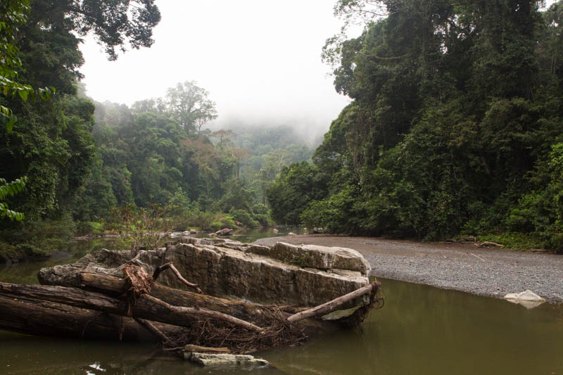 The Danum River