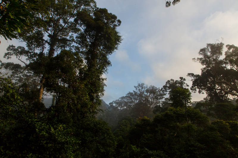 Rainforest At Dawn