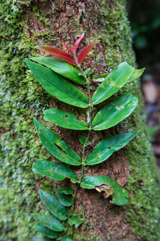 Epiphytes On Tree