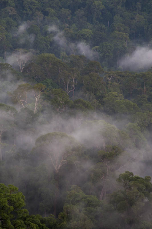 Rainforest In MIst
