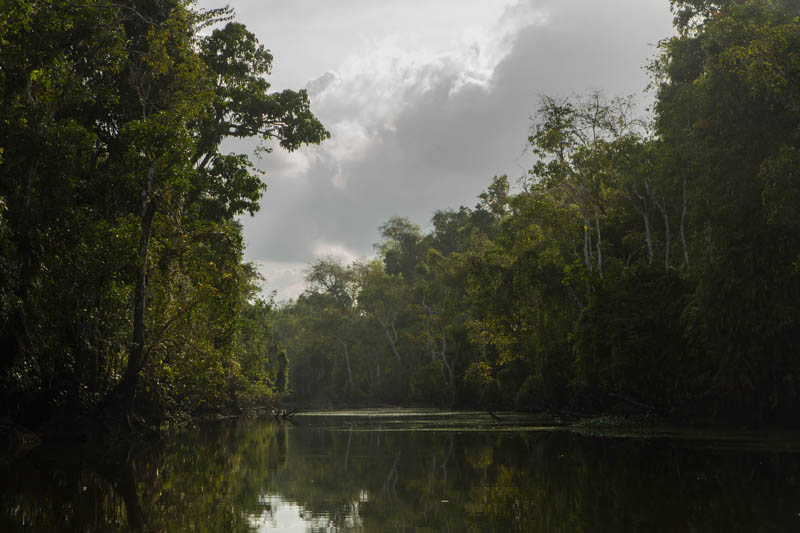 The Kinabatangan River