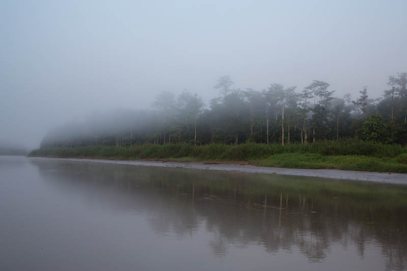 Banks Of The Kinabatagan RIver Shrouded In Fog