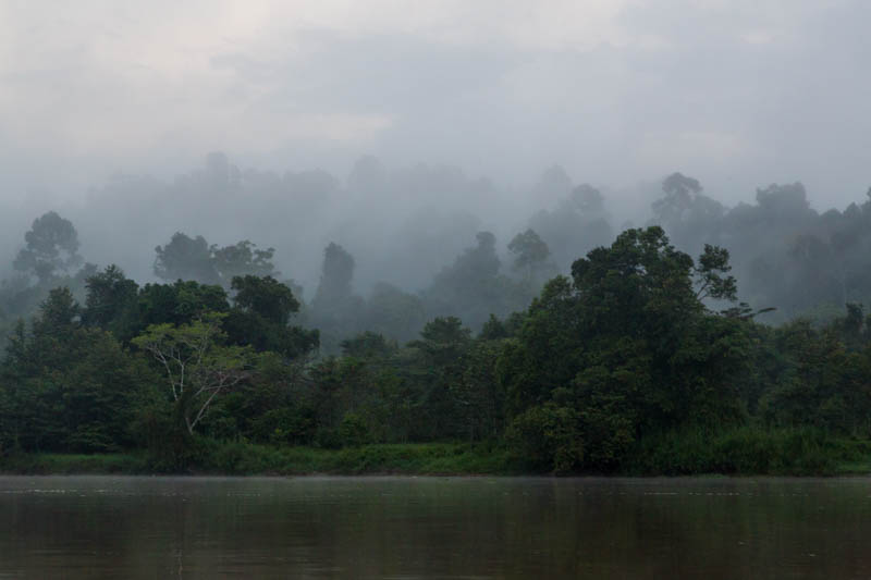 MIst Over The Kinabatangan River
