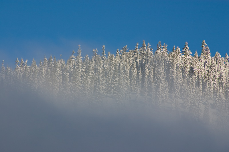 Snow Covered Trees Above Cloud