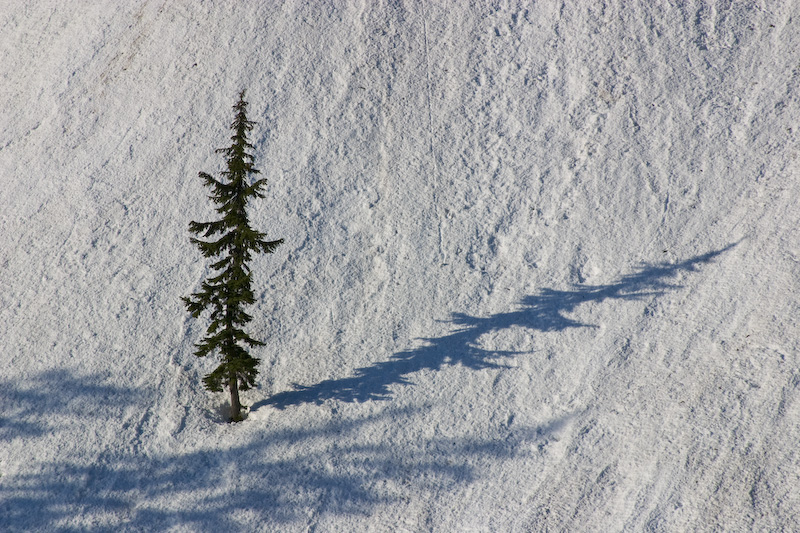 Shadow Of Tree On Snow Slope