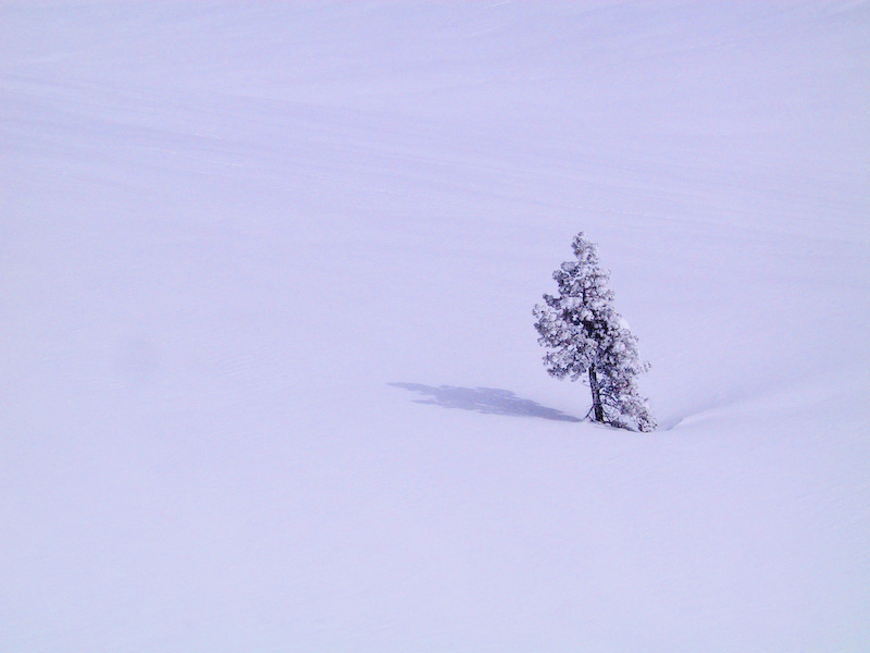 Lone Tree On Snow Slope